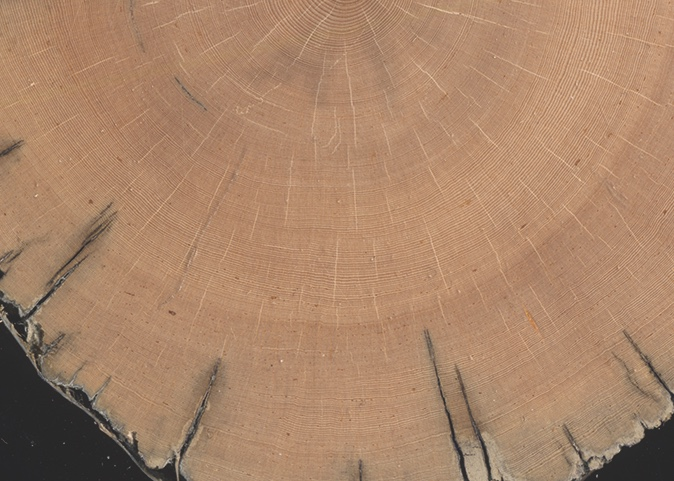 Short growing seasons make for tightly packed tree rings.