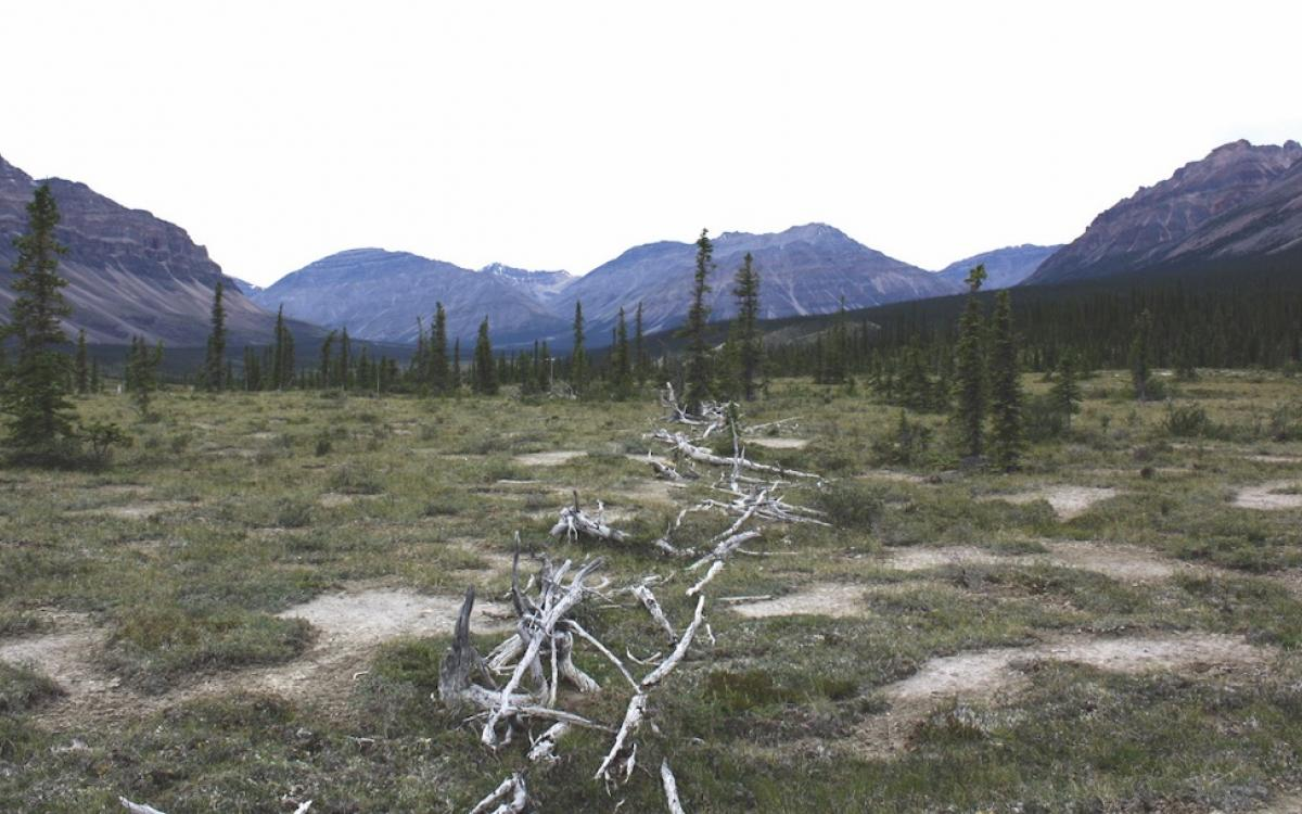 The Moose Horn Pass caribou fence has seen better days, but still stands.